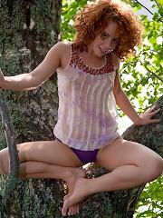 Redhead in a tree